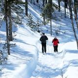 skiing-160